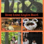 Disney Animal Kingdom Resort Review