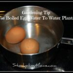 Use Boiled Egg Water To Water Plants