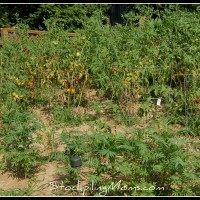 When Should You Plant Your Garden
