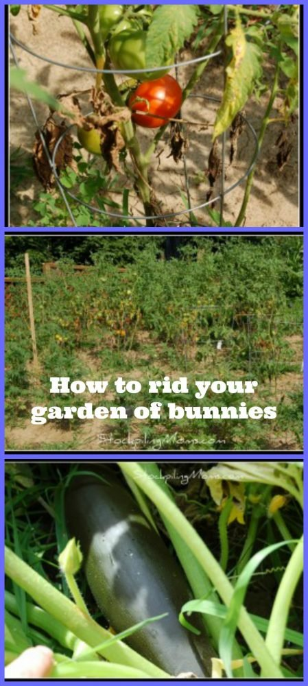 How to rid your garden from bunnies