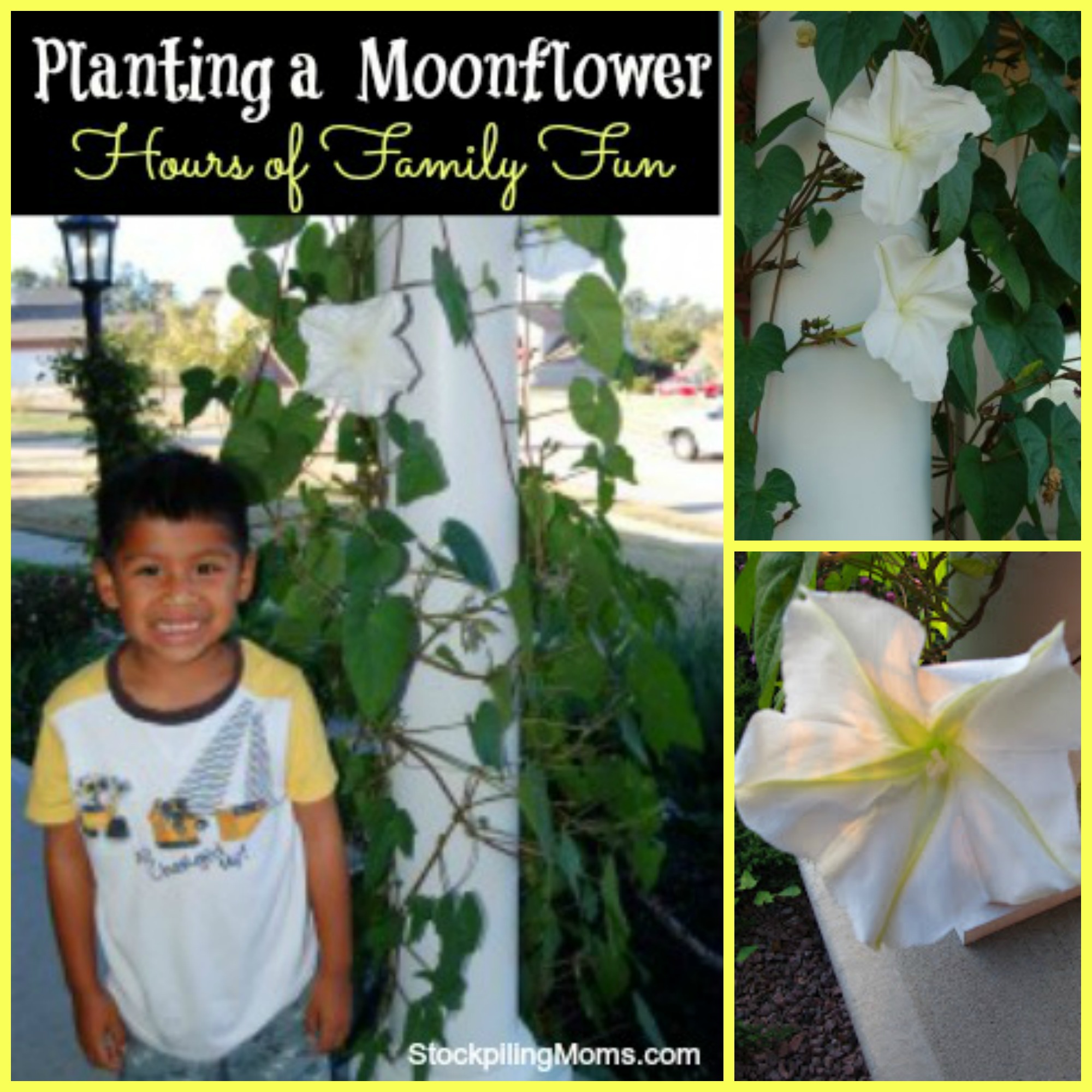 Planting a Moonflower = Hours of Family Fun