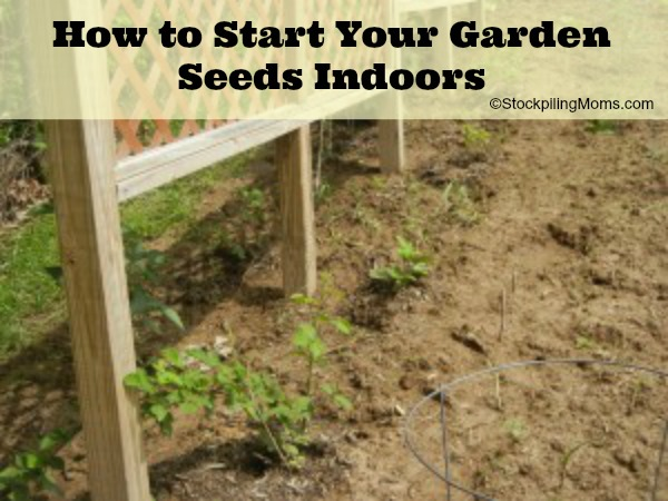 How to Start Your Garden Seeds Indoors