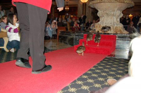 The Peabody Hotel Review - Memphis, TN