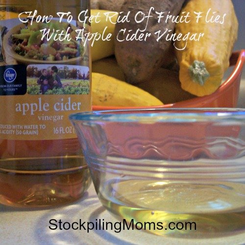 How to get ride of fruit flies with apple cider vinegar
