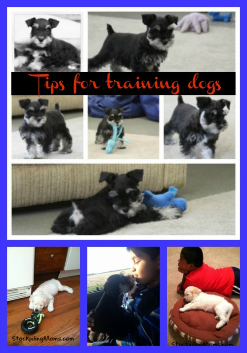 Tips for training dogs