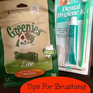 Tips For Brushing Your Pet's Teeth