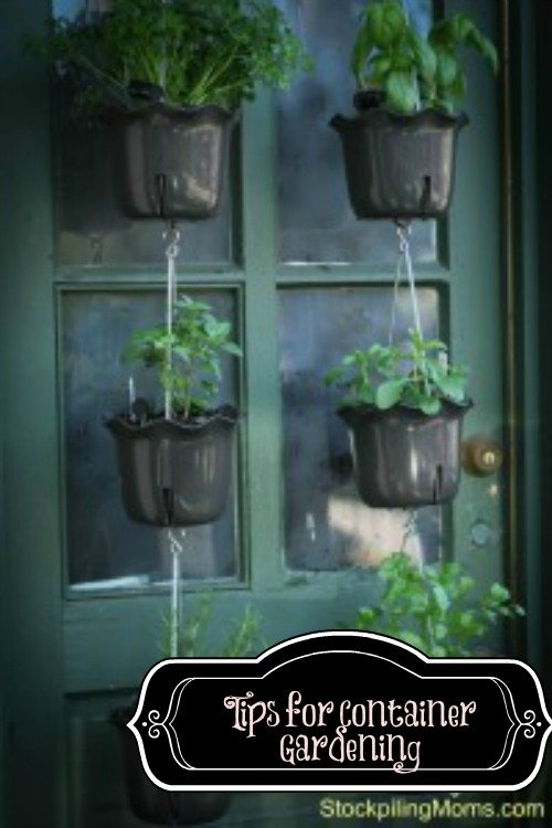 Tips for Container Gardening -