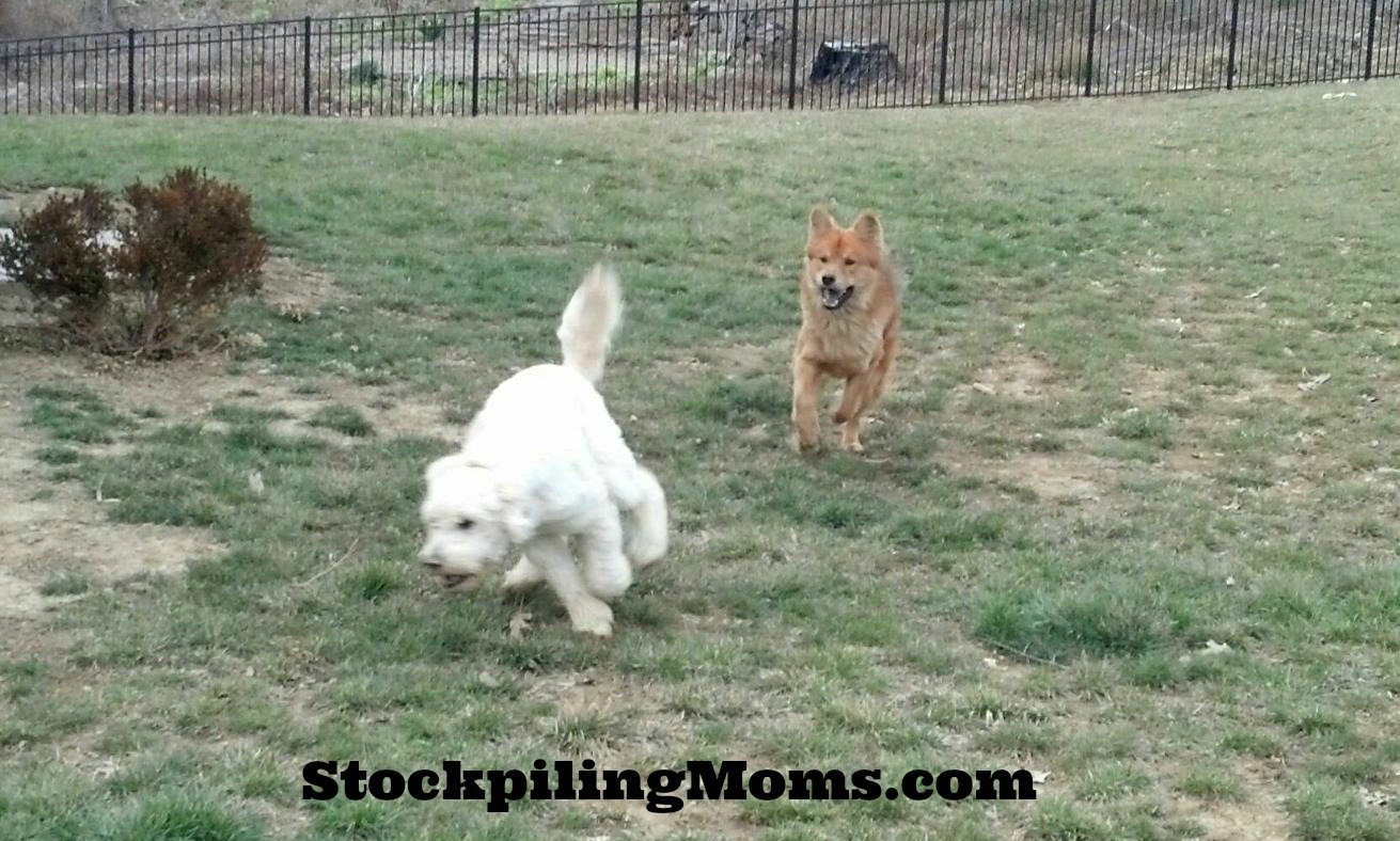 Non topical flea and tick prevention for pets