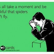 Spiders Don't Fly