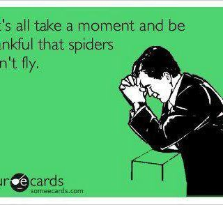 Spiders Don't Fly Ecard Humor