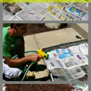 How to stop weeds from growing