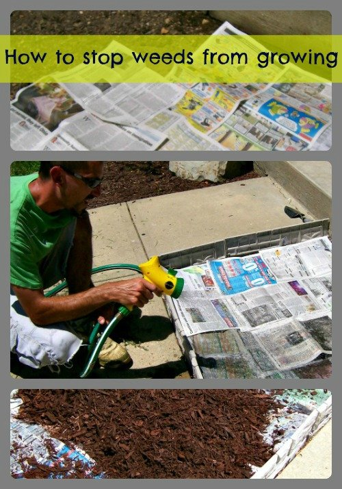 how to keep weeds from growing collage