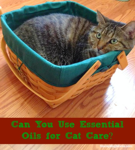 Can You Use Essential Oils for Cat Care