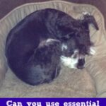 Can You Use Essential Oils for Dog Care