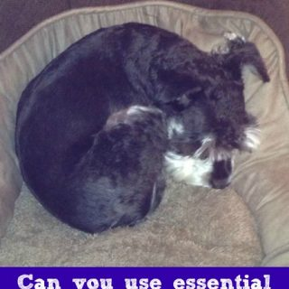 Can You Use Essential Oils for Dog Care?