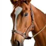 Using Essential Oils for Horse Care