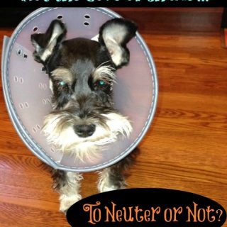 Should you neuter your pet? Tips for preparing for Neuter