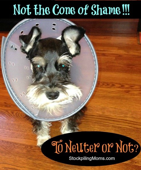 Not the cone of shame - to neuter or not, that is the question!
