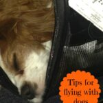tip for flying with dogs