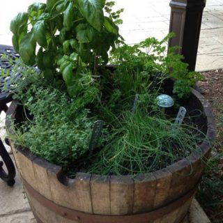 Barrel Herb Garden
