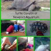 Turtle Canyon Now Open at Newport Aquarium