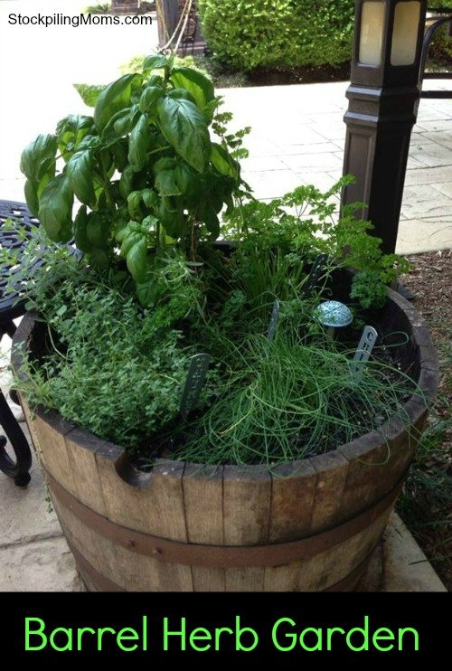 Tips For Planting A Barrel Herb Garden