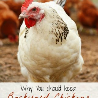 Why You Should Keep Backyard chickens as part of a frugal lifestyle