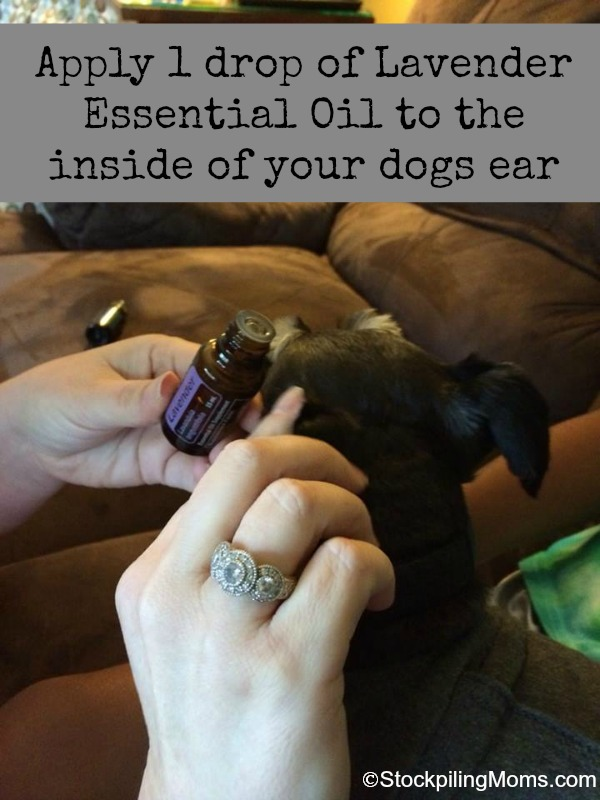 Can Lavender Essential Oil Be Used On Dogs