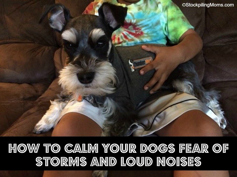 How to help dogs that fear storms, fireworks and loud noises