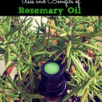 Uses and Benefits of Rosemary Essential Oil