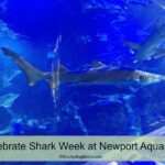 Celebrate Shark Week at Newport Aquarium
