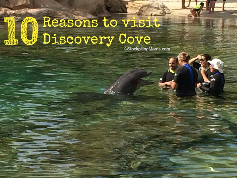 10 Reasons to visit Discovery Cove