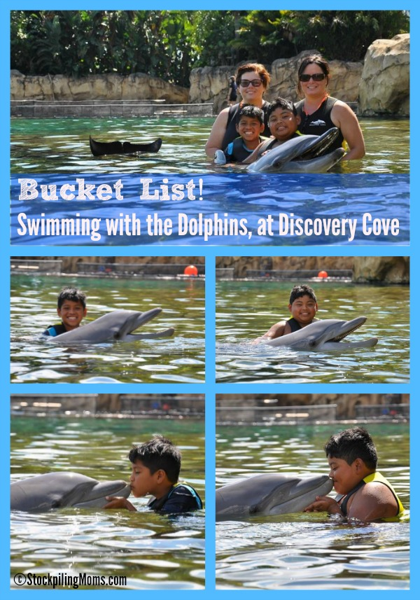 Bucket List! Swimming with the Dolphins at Discovery Cove