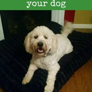 Tips for selecting the right bed for your dog
