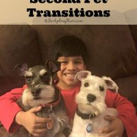 5 Steps To Easy Second Pet Transitions