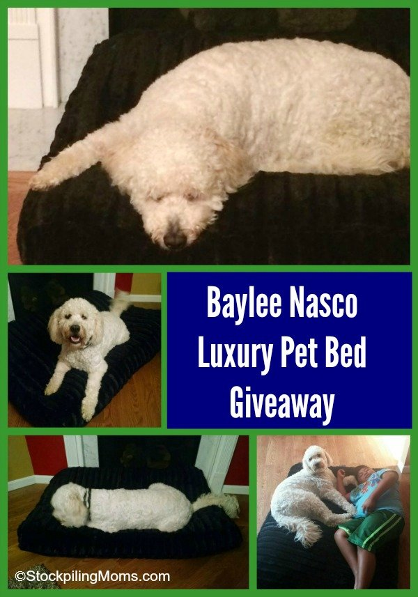 Baylee Nasco Luxury Pet Bet Giveaway