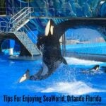 Tips For Enjoying SeaWorld, Orlando Florida