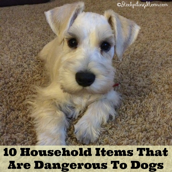 10 Household Items That Are Dangerous To Dogs