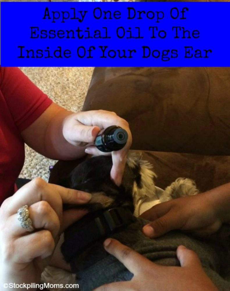 Apply One Drop Of Essential Oil To The Inside Of Your Dogs Ear