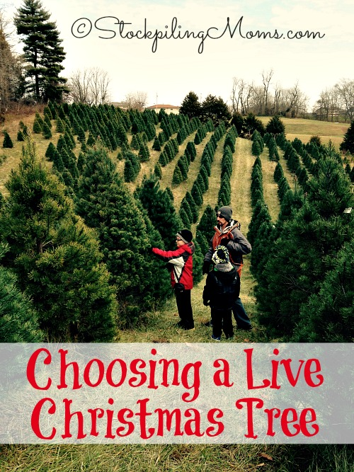 Caring For A Live Christmas Tree Part - 37: How To Take Care Of A ...