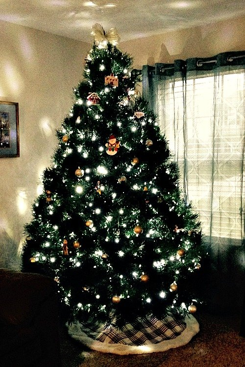 Choosing a Live Christmas Tree doesn't have to be complicated, it can be quite simple, we have tips to help you make it easy!