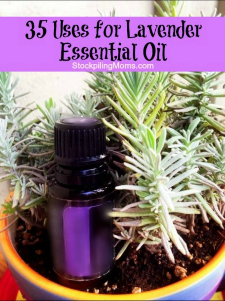35-Uses-for-Lavender-Essential-Oil-Updated