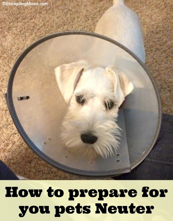 How to prepare for your pets neuter