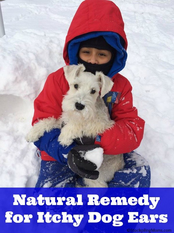Natural Remedy for Itchy Dog Ears
