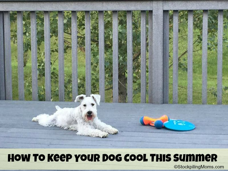 How To Keep Your Dog Cool This Summer - 2