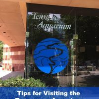 Tips for Visiting the Tennessee Aquarium in Chattanooga, TN