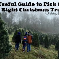 Useful Guide to Pick the Right Christmas Tree