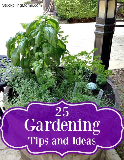 25 Gardening Tips and Ideas to help you this spring and summer!