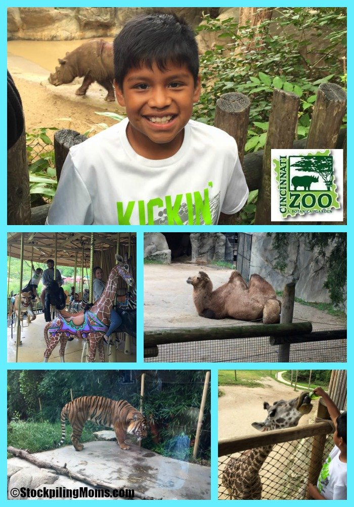 Family Fun At Cincinnati Zoo Amp Botanical Gardens