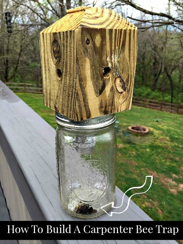 Step by Step DIY instructions on How To Build A Carpenter Bee Trap